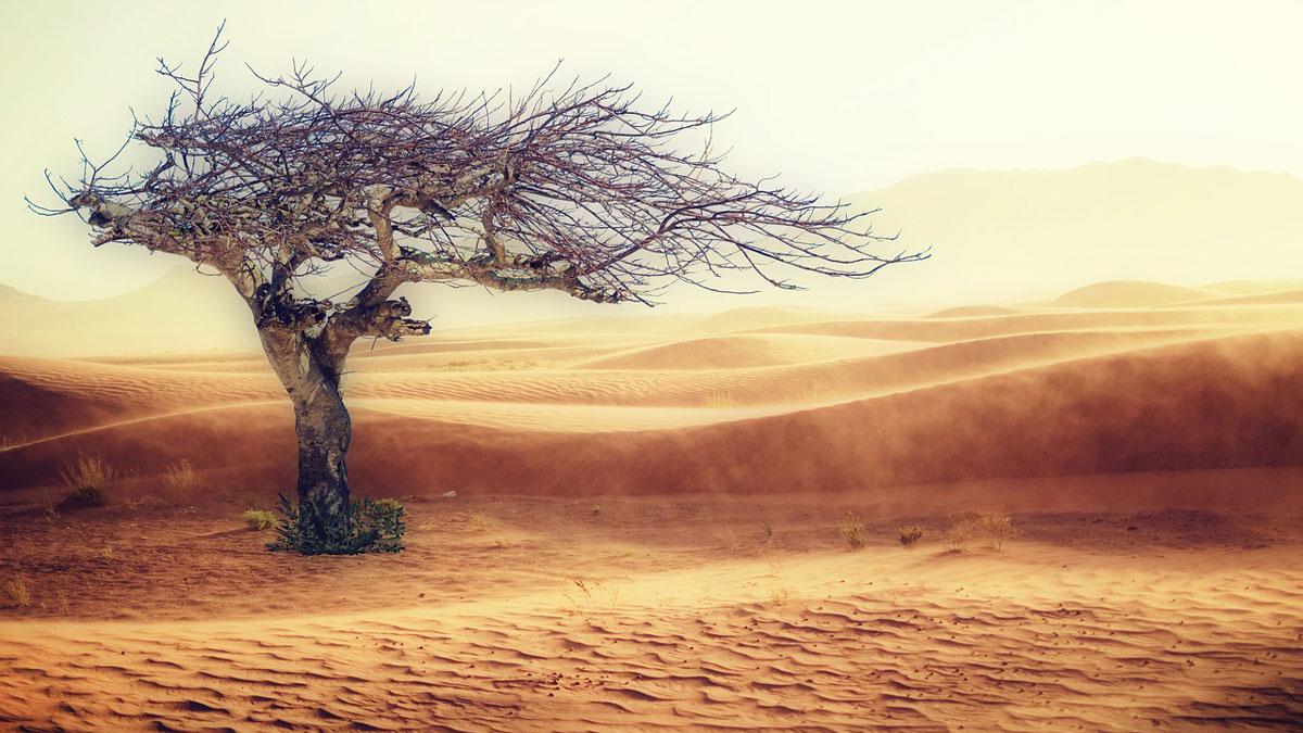 Klimawandel Wueste